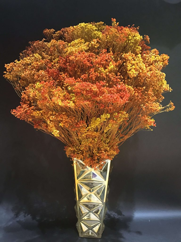 Hoa Broom Bloom khô
