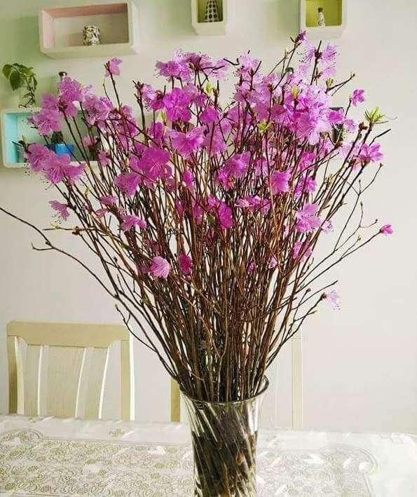 Hoa đỗ quyên khô